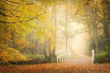 Herbstliche Farben im Wald von Original Mostert Photography