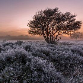 Frost on the Heath 3 sur Remco Bosshard