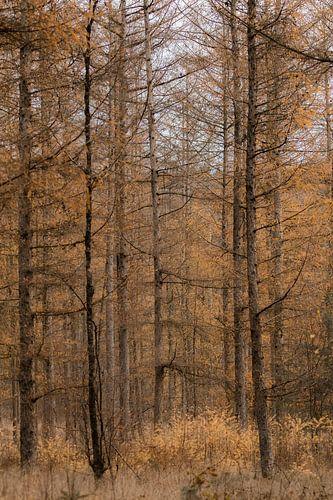 Door de bomen naar het bos kijken (deel 5)