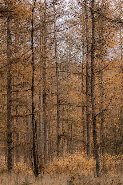 Den Wald vor lauter Bäumen nicht sehen (Teil 5) von Mascha Looije