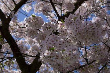 Blütenbaum von Ingrid Mooij