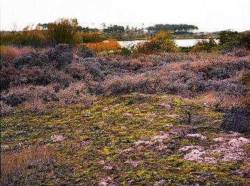 Wasserversorgungsdünen von Amstrdam - 3 von Rudy Umans