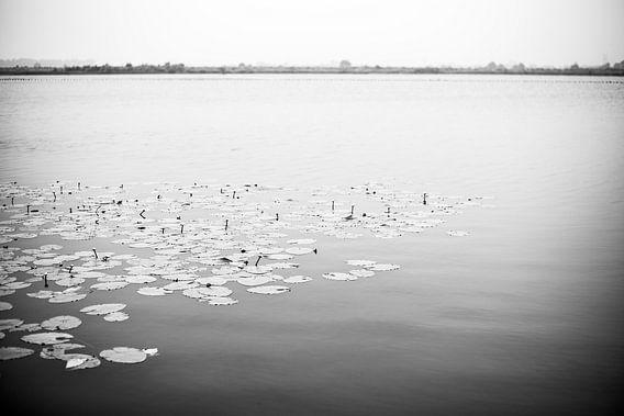 Nederlandse waterlelies op een meer in zwart wit, fotoprint