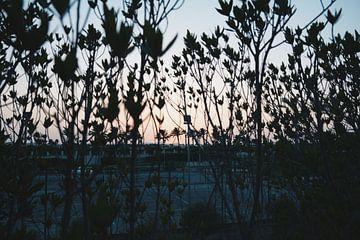 Sunset or sunrise? von Simon Lewaherilla