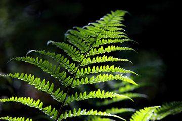 Green decorative fern van Jana Behr
