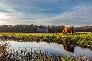 Hooglander met rovershut texel von Texel360Fotografie Richard Heerschap