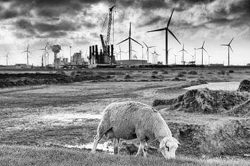 Schafe auf dem Deich am Eemshaven (schwarz und weiß) von Evert Jan Luchies
