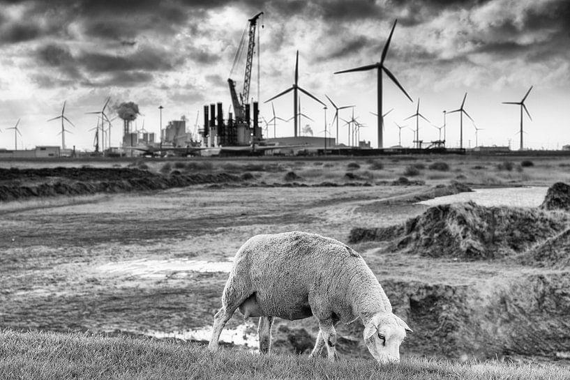 Schaap op de dijk bij de Eemshaven (zwart-wit) van Evert Jan Luchies