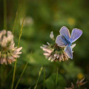 Fluwelen vlinder van Bernardine de Laat