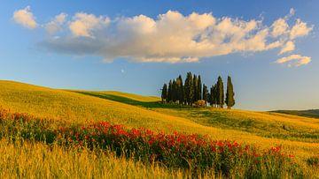 Cirkel van Cipressen in Torrenieri. Toscane, Italië van Henk Meijer Photography