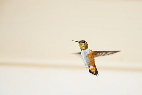 Canadese Kolibrie van Emile Kaihatu