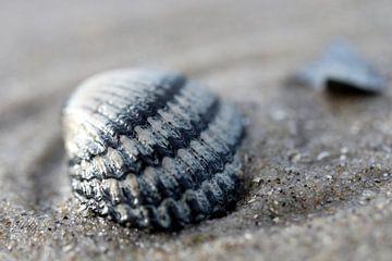 Coquillage sur la plage sur Mooi op Terschelling