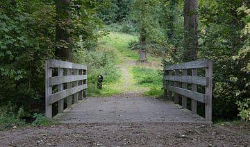 Brug in het park van Ivo Michielsen