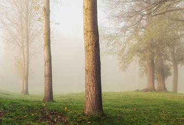 Mistige Populus Canadensis_H van Joris Pannemans - Loris Photography