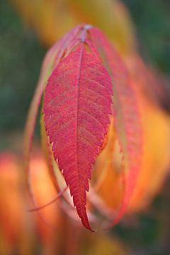 Leaving leaves van