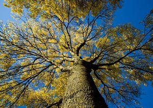 Herfstboom van