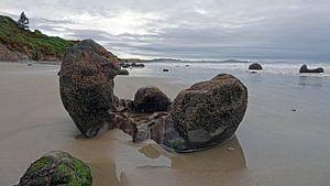 Moeraki Boulders strand in Nieuw Zeeland