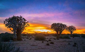 Prachtige zonsopkomst boven de Kalahari woestijn, Namibië van Rietje Bulthuis