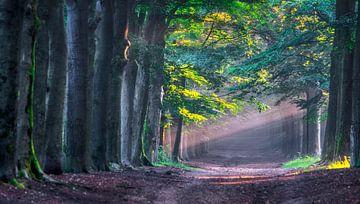 Lichtstrahlen von Robin Pics (verliefd op Utrecht)