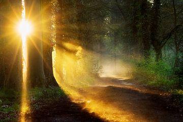Durchbruch der Sonne von Lars van de Goor