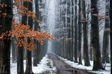 Erster Schnee und letzte Blätter von Lars van de Goor