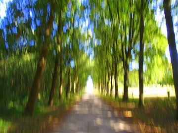 Bewegend Bos 3 van Peter Heins