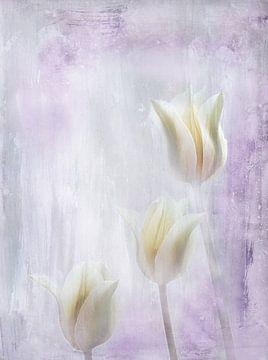 trois tulipes sur Claudia Gründler