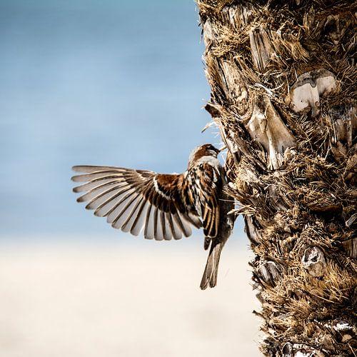 Mus met gespreide vleugels