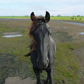 31. Buitendijks gebied, Noarderleech, Fries paard. van Alies werk