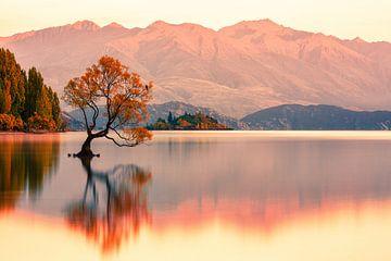 That Wanaka Tree Sunrise van Cho Tang
