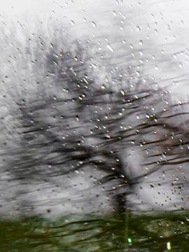 Herbstlicher Baum von Diana Kievit