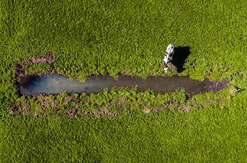 Kuh auf der Wiese von Freek van den Bergh