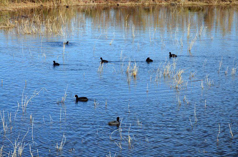 Watervogels in een meertje van het natuurgebied El Hondo in Spanje van Gert Bunt