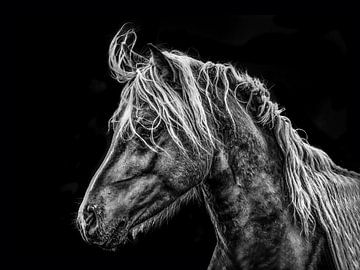 Portret van een paard in tegenlicht von Harrie Muis