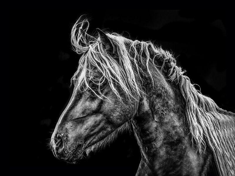 Portret van een paard in tegenlicht van Harrie Muis