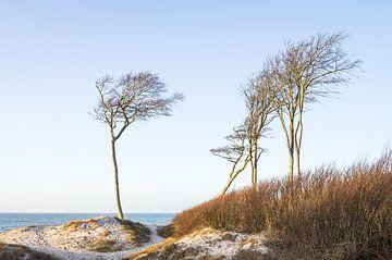 West strand duinen vis land Darß van Jürgen Schmittdiel Photography