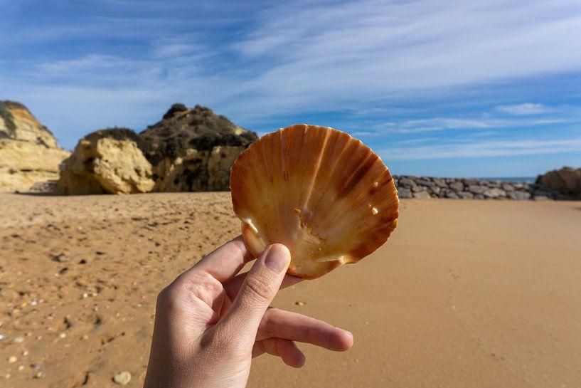 Schelp op een strand in Portugal van Jacoba de Boer