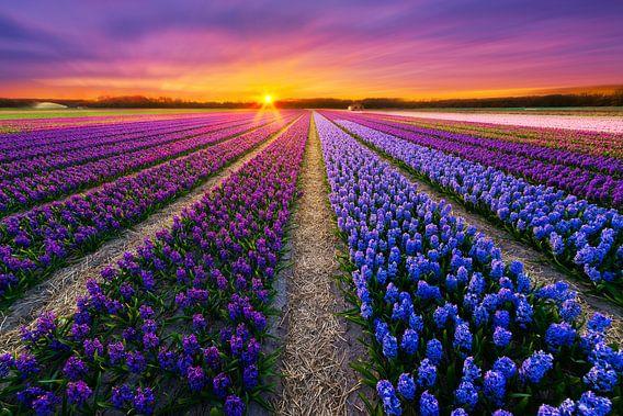 Bloemenveld van  Albert Dros