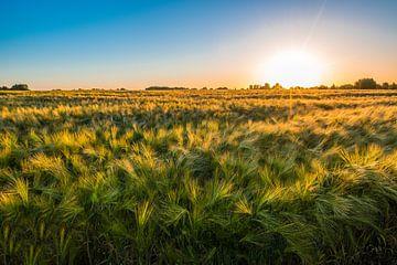 Getreidefeld von Peter Deschepper