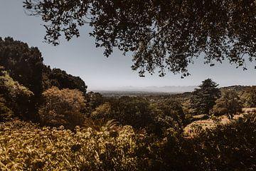 Zuid-Afrikaans landschap | Botanische tuin Kirstenbosch van Floor Bogaerts
