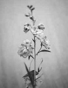 bloemstilleven van