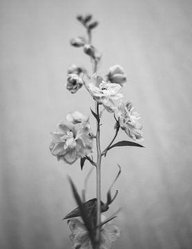bloemstilleven van Martha Olech