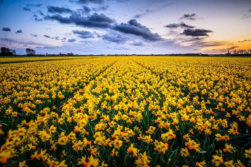 Narcissen bij zonsondergang van Richard Guijt Photography