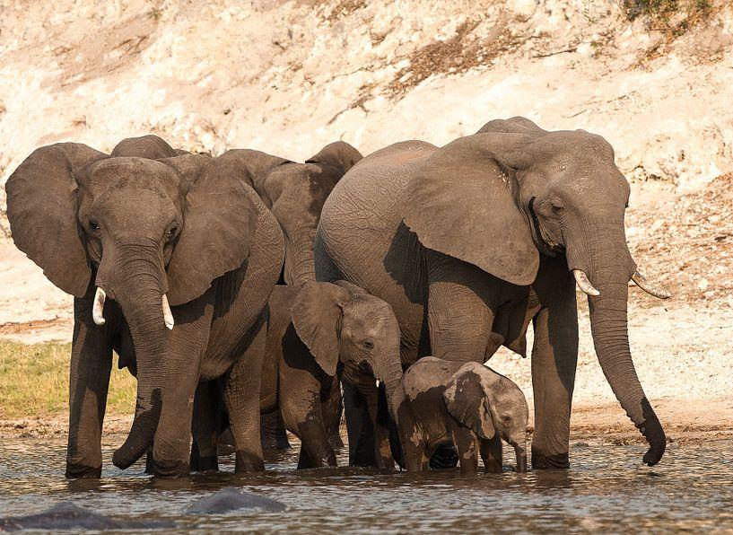 Together we are strong! van Robert Kok