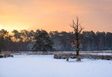 Prachtige winterse ochtend met verse sneeuw van Jos Pannekoek