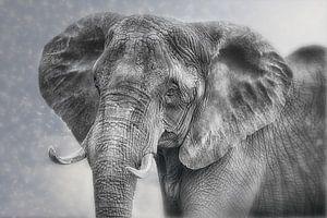 Proud Elephant Cow van