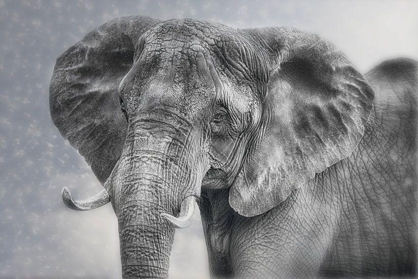 Proud Elephant Cow van Joachim G. Pinkawa