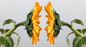 Sonnenblumen staredown. von Jaap Spaans