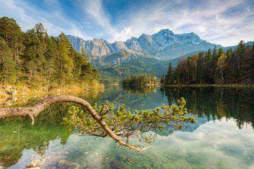 Pine at the Eibsee in Bavaria van Michael Valjak