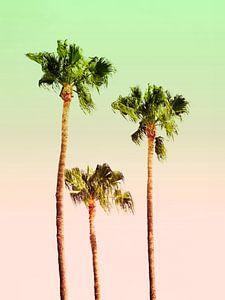 PASTEL PALM TREES
